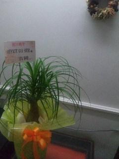 11周年の観葉植物