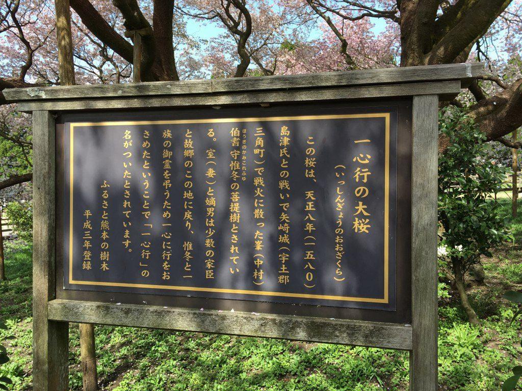 一心行の大桜の説明書き